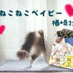 僕が猫なら、君はマタタビ「ねこねこベイビー」楢崎壮太